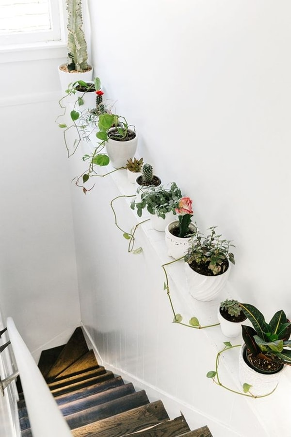 Repisa con plantas en escalera