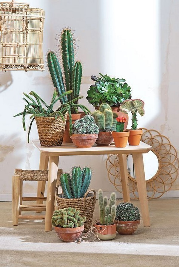 Ideas para decorar interiores con cactus