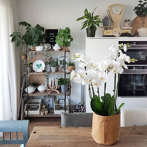 Orquídeas para decorar interiores