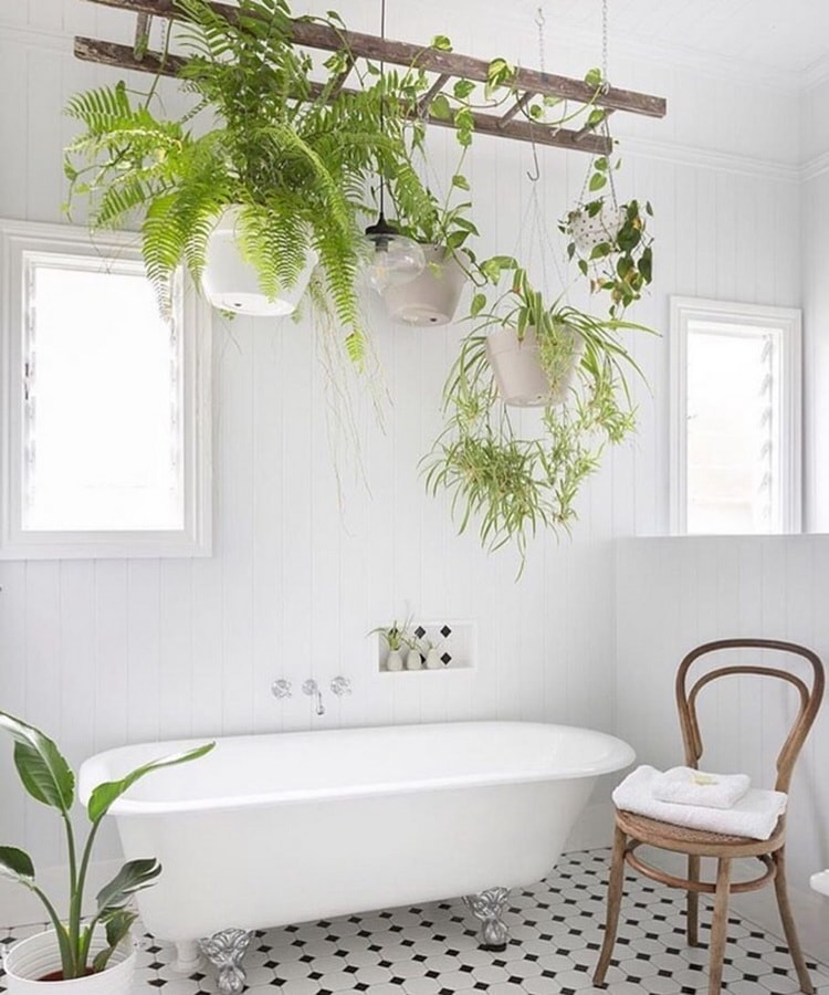 Ideas para decorar el baño con plantas